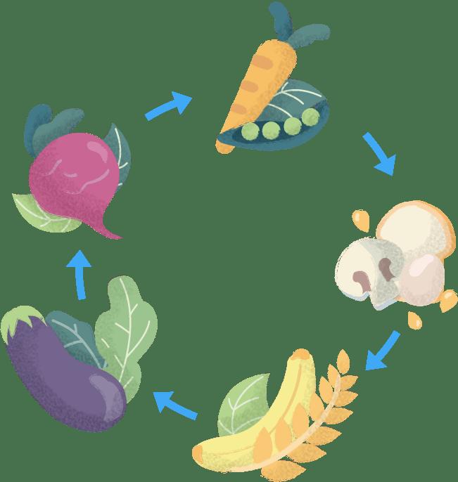 Dietitian_Illustration_02